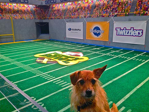 Animal actor Superin Animal Planet's Puppy Bowl from the barking lot